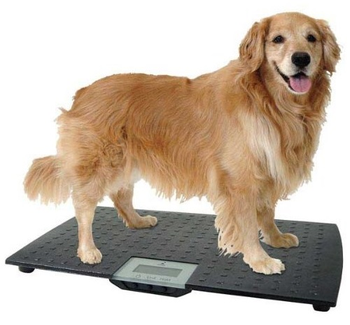 Redmon Precision Digital Pet Scale